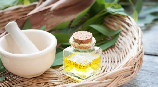 Эфирное масло эвкалипта - полезные свойства и применение при болезнях суставов